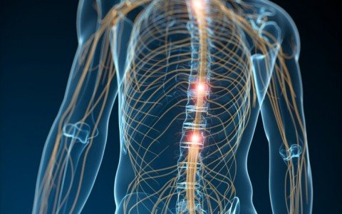 Why Is The Nervous System So Important?